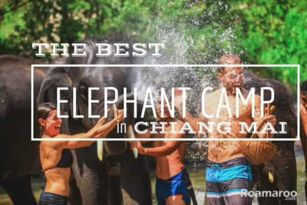 Elephants in Thailand - Best elephant camp in Chiang Mai