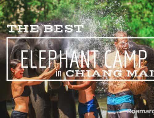 Elephants in Thailand – Patara Elephant Farm