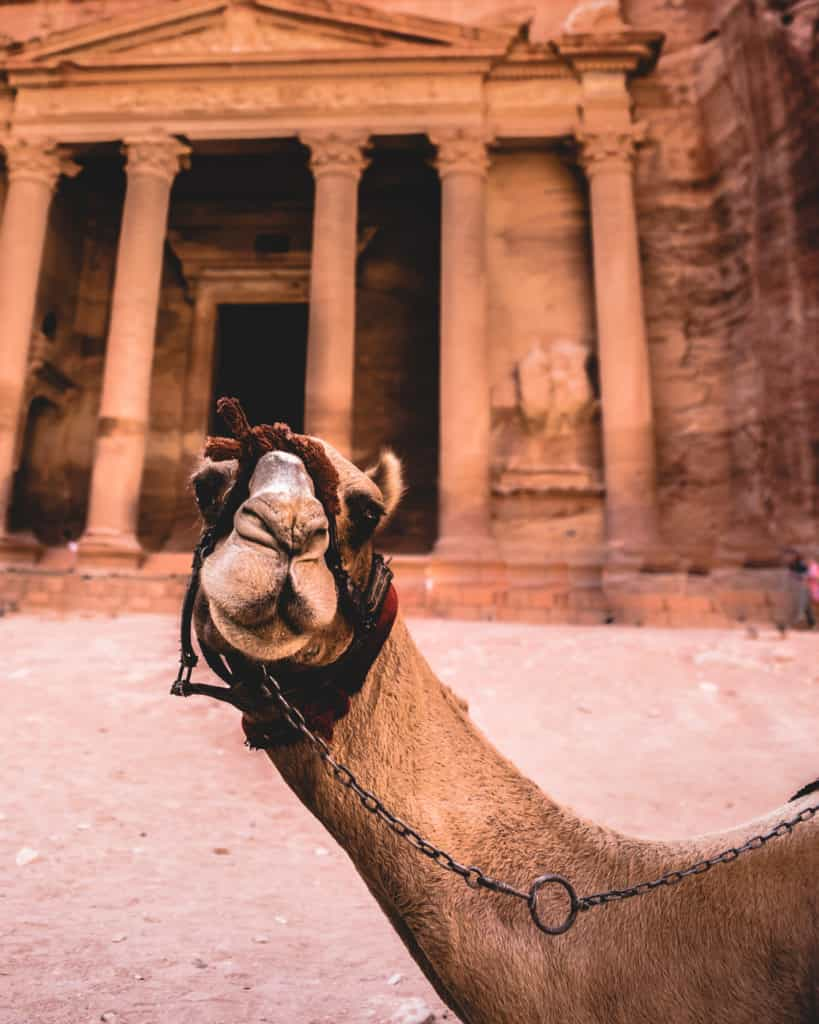 Camel at Petra Jordan