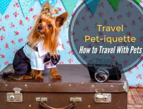 Travel Pet-iquette: Traveling with Pets